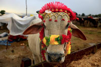 Gau rakshaks  have brought shame to India