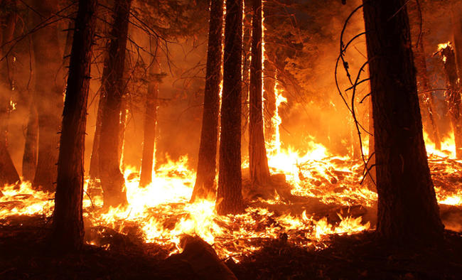Wet winter lead to more small wildfires, not less: NASA